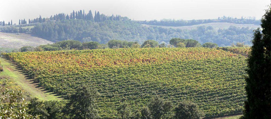 Tenuta Guicciardini Strozzi San Gimignano3